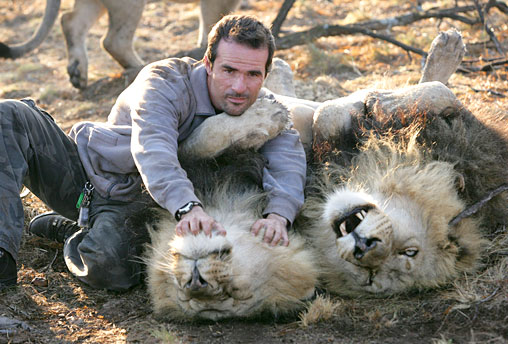 Kevin Richardson with lions.