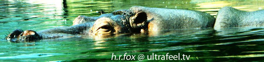 Hippopotamus - Flusspferd. (c) Ultrafeel.tv
