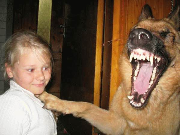 Dangerous sheperd dog             and child.
