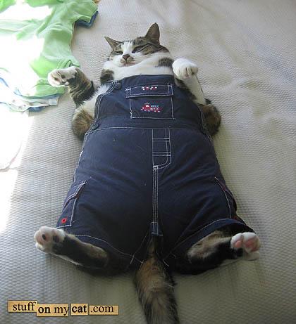 Pretty fat cat in trousers...