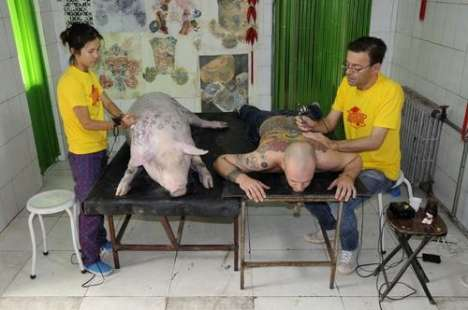 tattoo pig. Man and pig tattooed in the