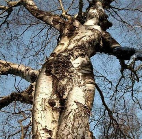 Tree that looks like a woman.