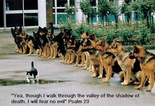 cat-extreme-confidence.jpg