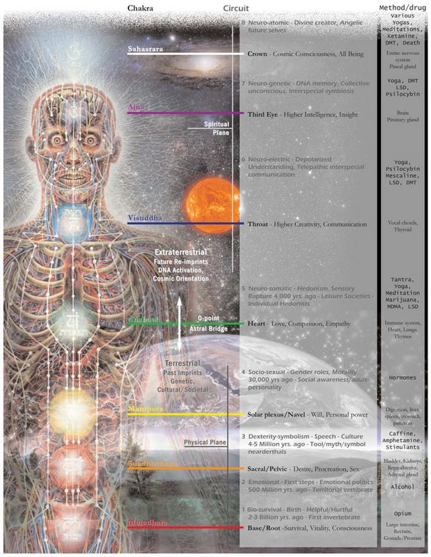 chakra-chacra-schakra-colors-signs-circuits-drugs-lsd-marijuana-mdma-psilocybin-psilocibin-mescaline-meskalin-ketamine-yoga-circuit.jpg