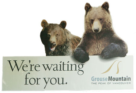 These bears are waiting for you on Grouse Mountain in Vancouver.
