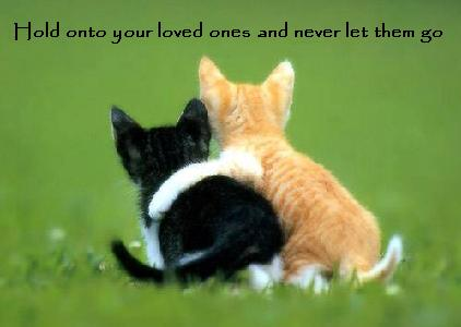 Meow! Miau!  Kitten. Katzen. Cat. Cats. Hold onto your loved ones and never let them go.