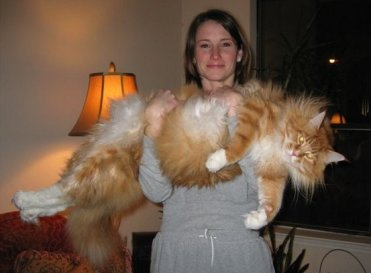 Babe with huge pussy...