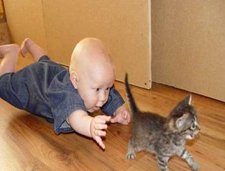 Baby chases kitten.