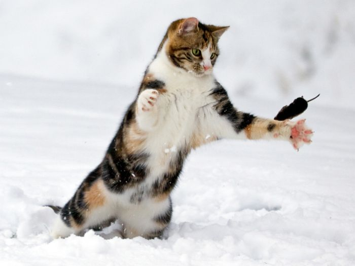 Cat catches flying mouse...