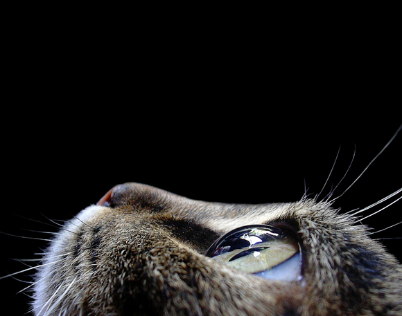 The eye of a cat.