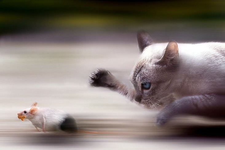 Cat mouse speed chase.
