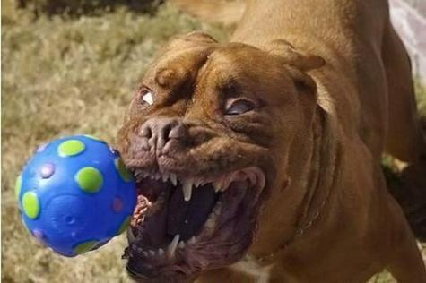 Dangerous dog...