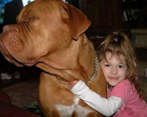 Little girl and her huge dog.