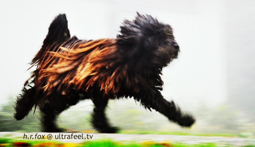 Running Dog (Photo: h.r.fox @ ultrafeel.tv)