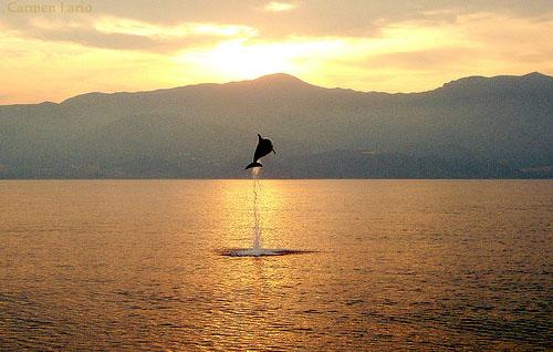 Dolphin jumping. (c) Carmen Lario