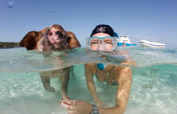 Pig swimming in sea with woman.