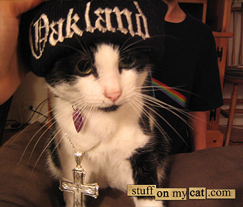 Macho hip hop cat...