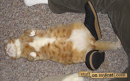 Cat with shoes...