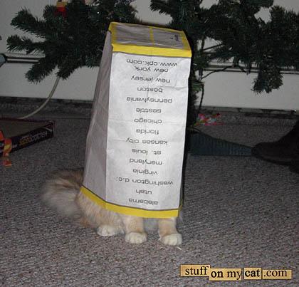 Warning: Cat inside!