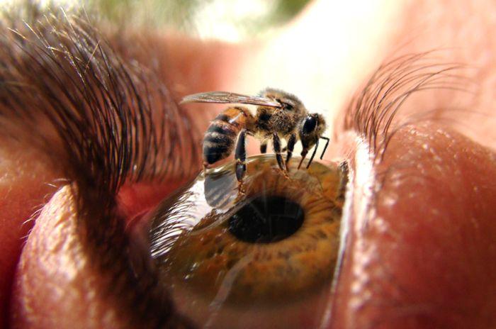 Bee on Eye.