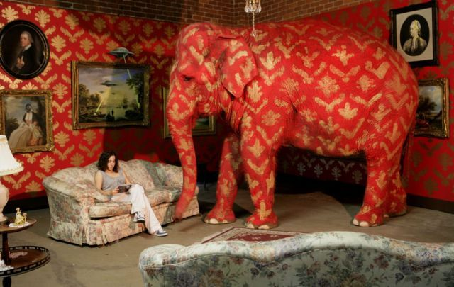 Woman sitting on sofa reading a book and elephant in one room.
