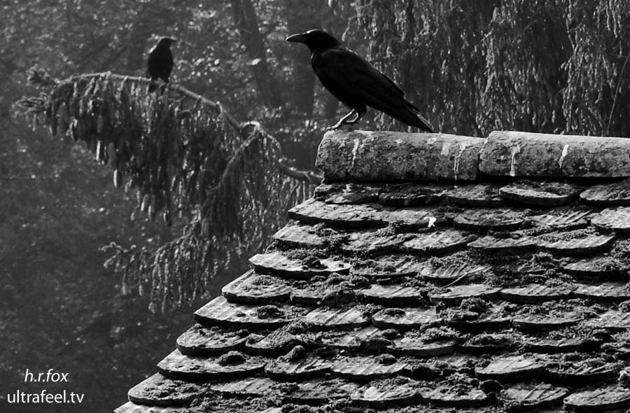 Dark Crows by h.r.fox @ ultrafeel.tv