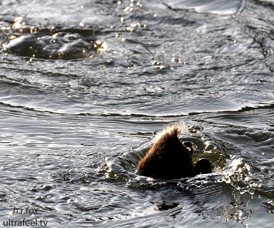Duck Dive (c) h.r.fox @ ultrafeel.tv