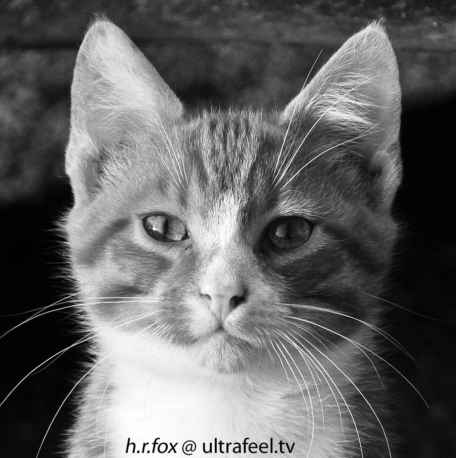 Black and white cat by h.r.fox @ ultrafeel.tv