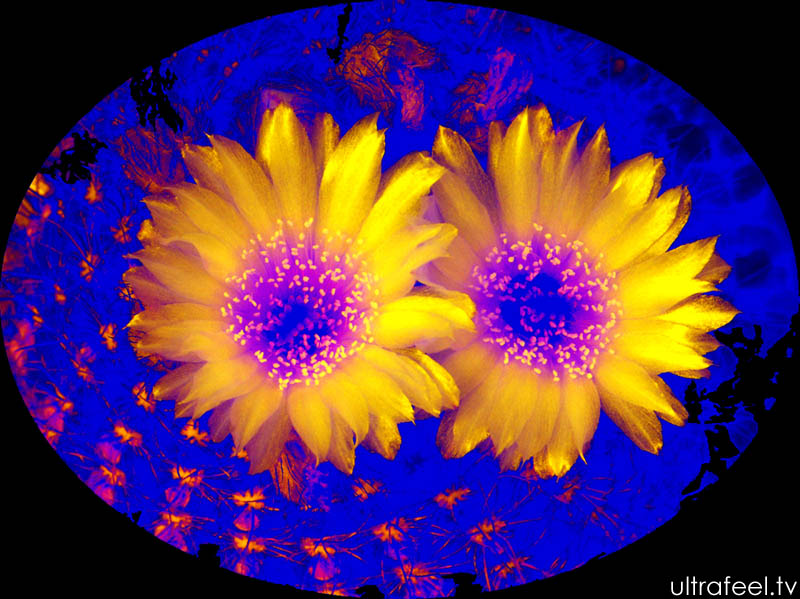 Yellow psychedelic cactus by h.r.fox @ ultrafeel.tv