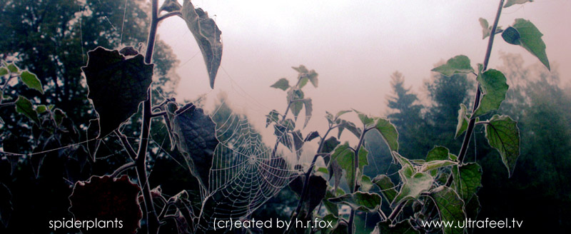 """""""Spiderplants"""" Spidernet and Physalis plants  (cr)eated by h.r.fox / www.ultrafeel.tv"""