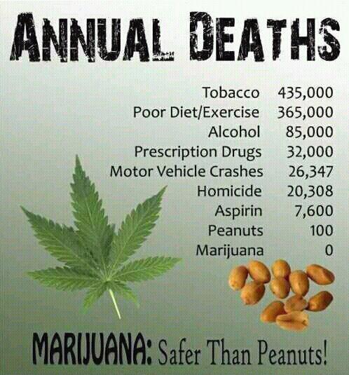 Annual deaths of Marijuana: Peanuts