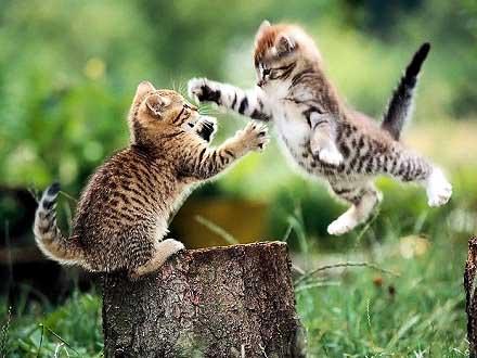 Pussy-cats jumping around in Matrix-style. Katzen springen im Matrix-stil in der luft herum...