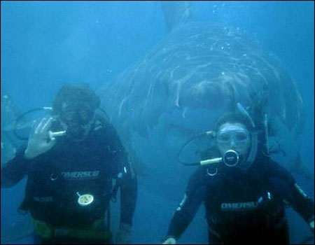 Fake photo: Shark behind scuba divers.
