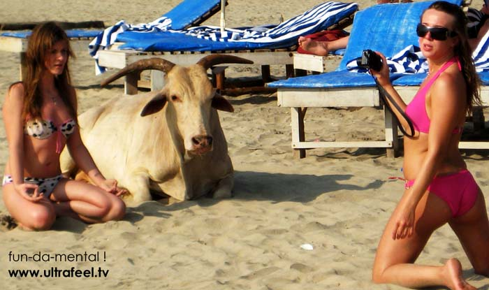 Sexy girls posing and another one doing meditation next to holy cow in Goa, India.
