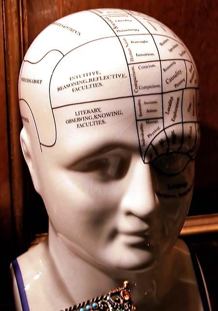 Head brain bust