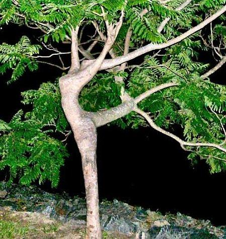 Dancing woman tree